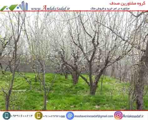فروش باغچه 500 متری در تهراندشت
